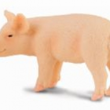 piglet-small-t9668